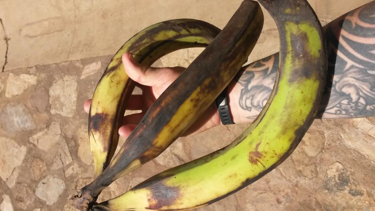 Huge Bananas (Makemba)
