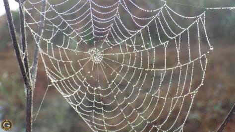 southafricanspiderweb1