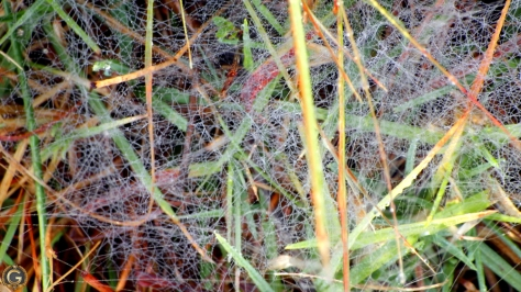 southafricanspiderweb3